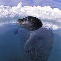 Image result for Arctic Ocean